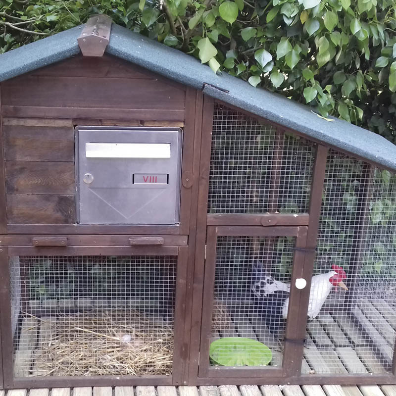 2019 La cage à poules_SALVETTI